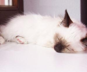 Phoebe-klein_n